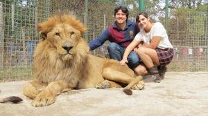 Leão velhinho - 18 aninhos